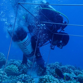 Post-doc, Andy Shantz drilling holes to attach herbivore exclosures