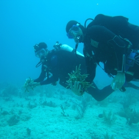 Nate and Andy collecting Acropora cervicornis from the coral nursery for some experiments