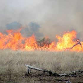 Fire is an important agent of disturbance in Kruger