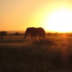 Elephant with Kruger Sunrise