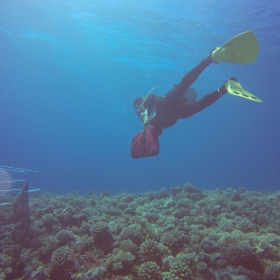 Researcher, Tom Adam, installing exclosures on the fore reef