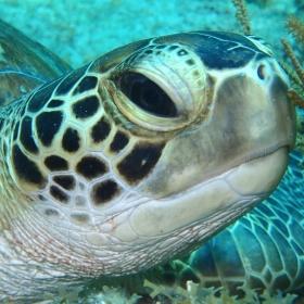 Turtle visitor