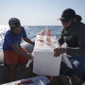 Pedro making a float for shark tagging project (photo Sam Shimizu-Jones)