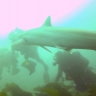 Embedded thumbnail for PISCO Research Diving, Channel Islands Kelp Forests